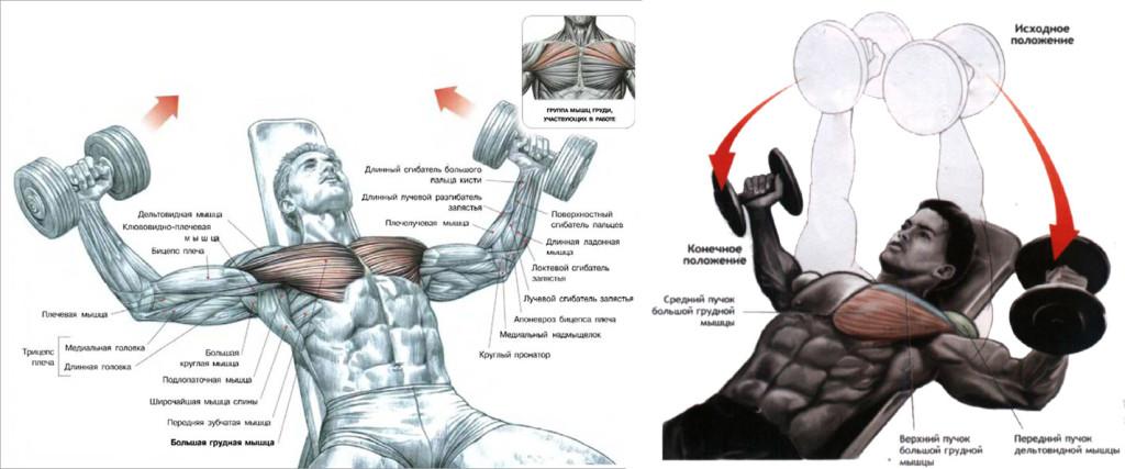 Как накачать верхние грудные мышцы в домашних условиях