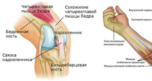 Связки и суставы