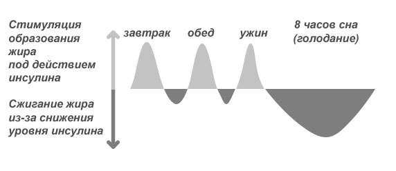 График сжигания и накопления жира под действием инсулина