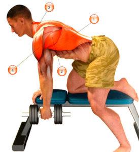 Мышцы, которые качает тяга гантели в наклоне