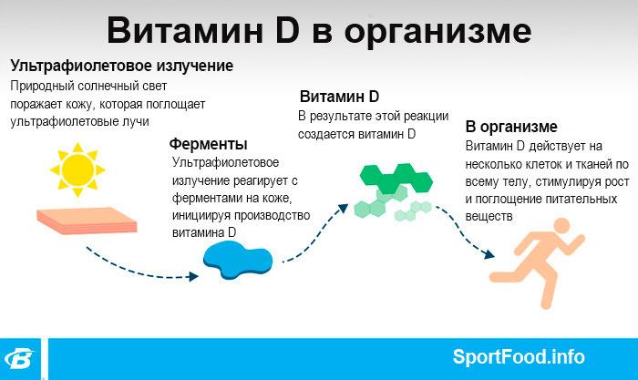 Действие витамина D в организме человека