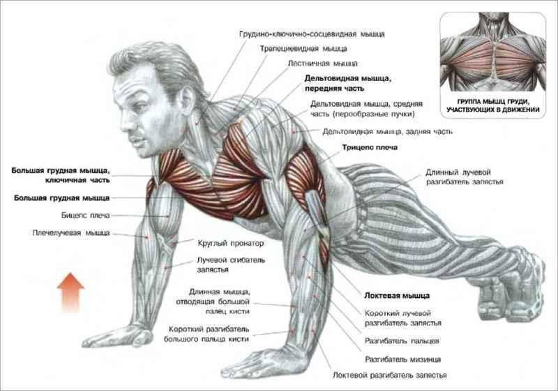 Схемы упражнений для мышц 72