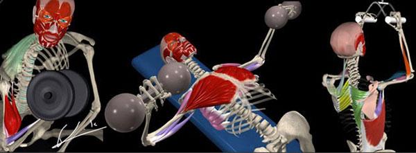 Как растут мышцы человека и как можно ускорить рост мышц