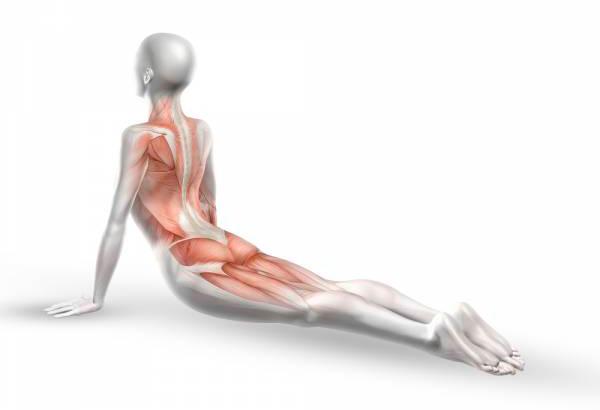 Какие можно выполнять упражнения для позвоночника из йоги