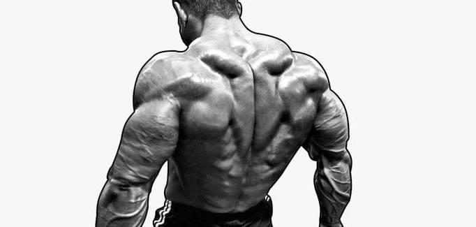 Упражнения для трапециевидной мышцы спины