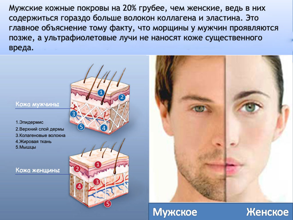 Строение кожи у женщин и мужчин