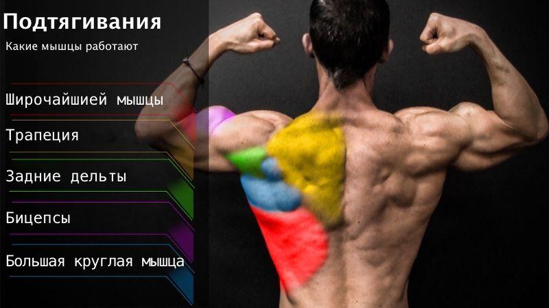 Какие мышцы качаются при подтягиваниях