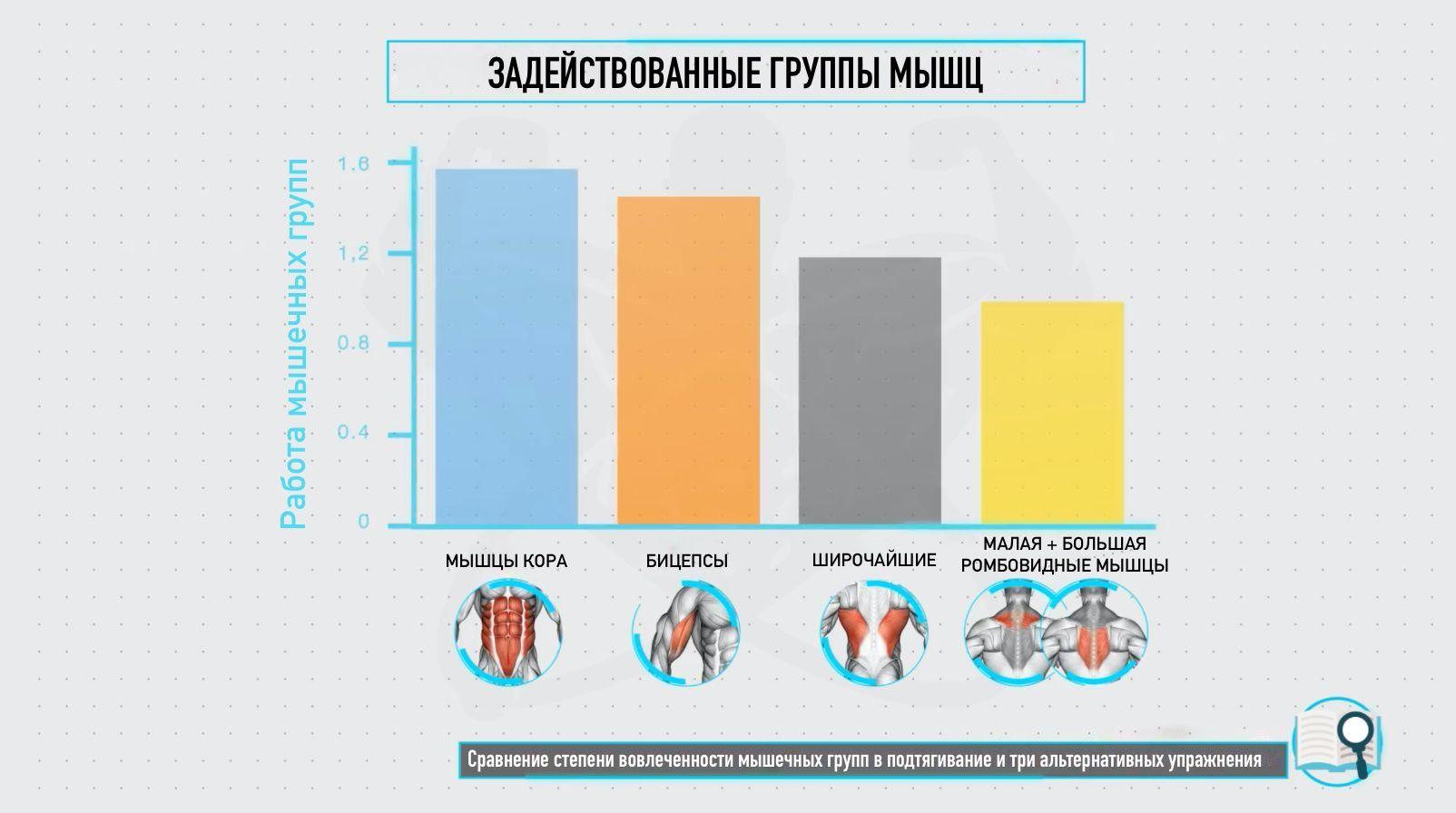 Активность мышц при подтягиваниях