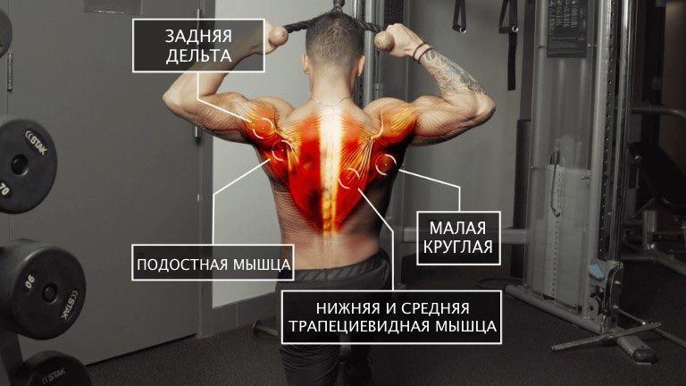 Прокачиваются: задняя дельтовидная мышца, нижняя и средняя трапециевидные мышцы, малая круглая мышца, подостная мышца