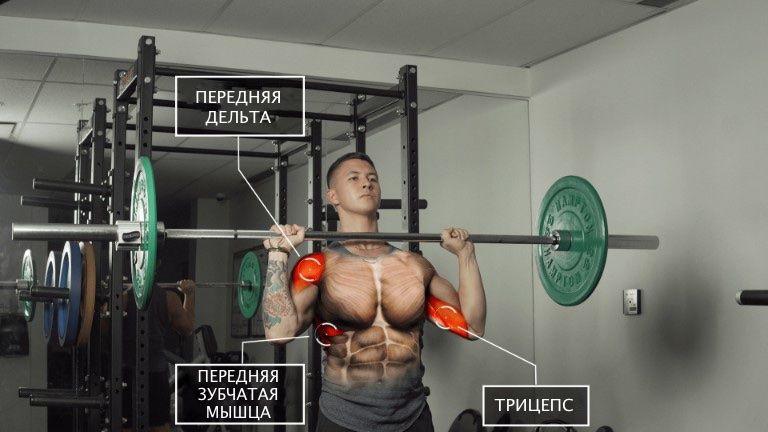 Жим штанги стоя для передней дельтовидной мышцы, трицепса, передней зубчатой мышцы